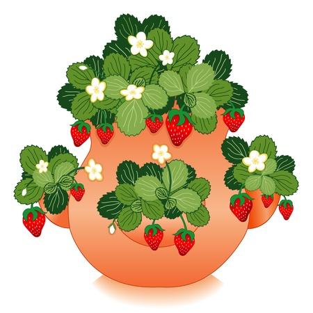 Erdbeeren in Clay Strawberry Jar Planter Standard-Bild - 12392305