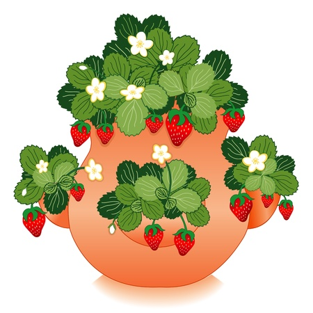 planter: Strawberries in Clay Strawberry Jar Planter