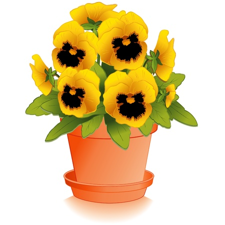 Golden Pansy Flowers in Clay Flowerpot Vector