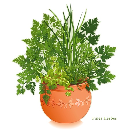 herbes: Fine Herbs Garden  French cooking classic blend, Fines Herbes, left-right  Chervil, Tarragon, Sweet Marjoram, Chives, Italian Parsley  Clay flowerpot planter, floral design  EPS8 compatible   See other herbs and spices in this series
