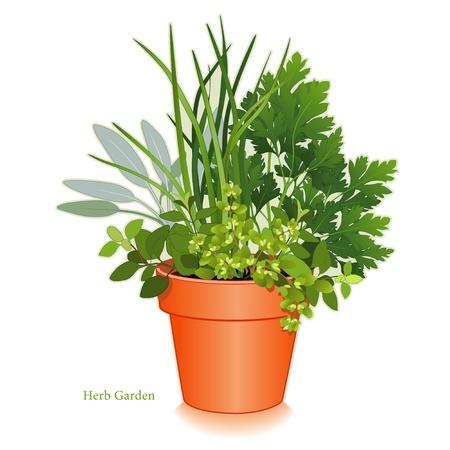 Keuken Herb Garden Clay bloempot plantenbak met aromatische kruiden koken, links-rechts Italiaanse Oregano, Salie, Bieslook, platte peterselie, marjolein Stock Illustratie