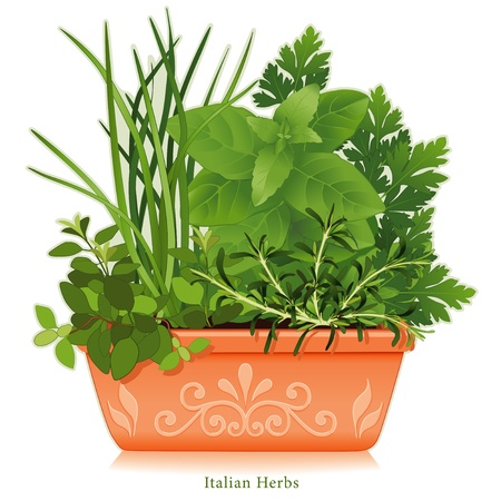 clay pot: Italian Herb Garden  Traditional flavors for Mediterranean cuisine, left-right  Oregano, Garlic Chives, Sweet Basil, Flat Leaf Parsley, Rosemary  Clay flowerpot planter, floral design  EPS8 compatible  See other herbs and spices in this series