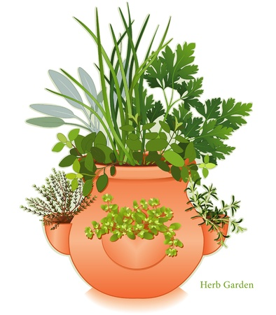 planter: Herb Garden in Clay Strawberry Jar Planter   For gourmet cooking, left-right  English Thyme, Italian Oregano, Sage, Chives, Flat Leaf Parsley, Rosemary, Sweet Marjoram  EPS8 compatible  See other herbs and spices in this series  Illustration
