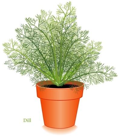 aromatique: Dill Herb plantes Illustration