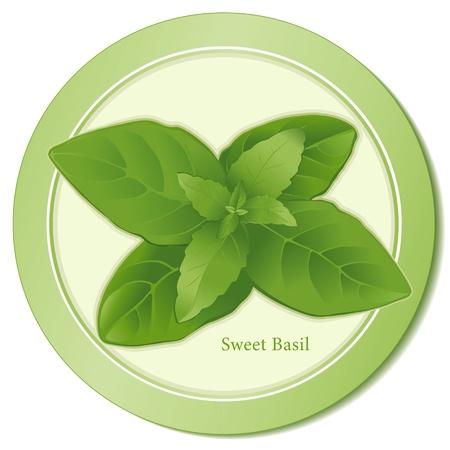 Sweet Basil Herb Icon Stock Illustratie
