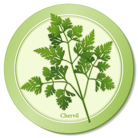 French Chervil Herb Icon Illustration