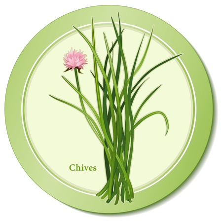 herbes: Chives Herb Icon Illustration