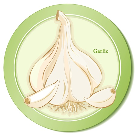Garlic Herb Bulb and Cloves Icon Vector