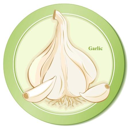 cloves: Garlic Herb Bulb and Cloves Icon Illustration