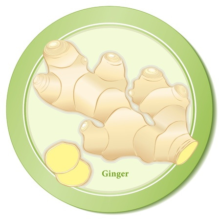 ginger root: Ginger Root Spice Icon Illustration