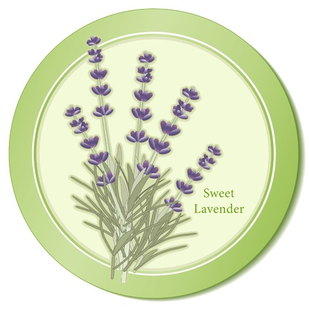 Sweet Lavender Herb Icon Vector