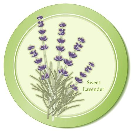 Sweet Lavender Herb Icoon