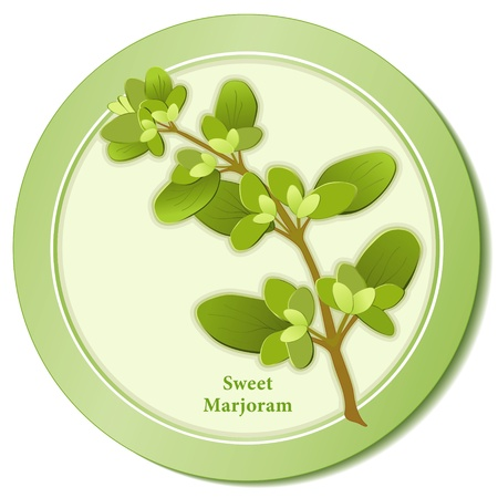 Sweet Marjoram Herb Icon Stock Vector - 13458984