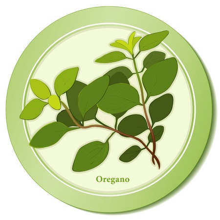 Italian Oregano Herb Icon Stock Vector - 13458987