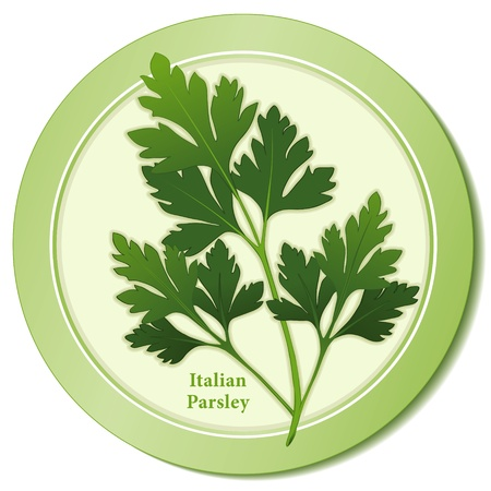 Italian Parsley Herb Icon Vector