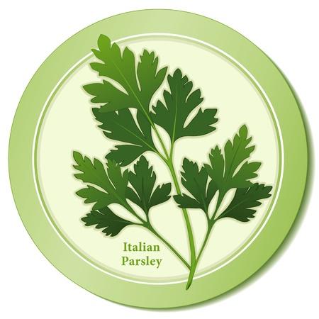 aromatique: Persil italien Herb Ic�ne Illustration