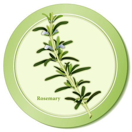 Rosemary Herb Icon Vector