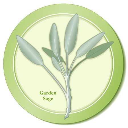 Garden Sage Herb Icon Vector