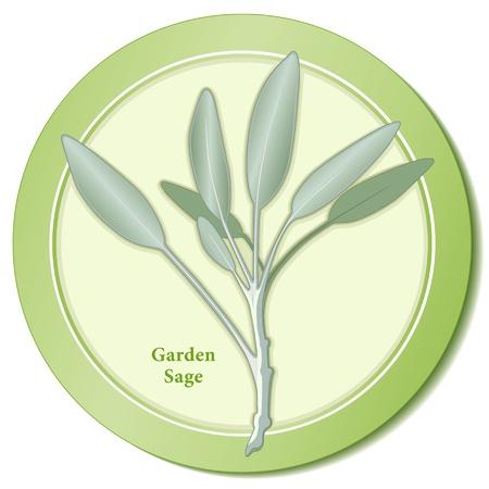 Garden Sage Herb Icon