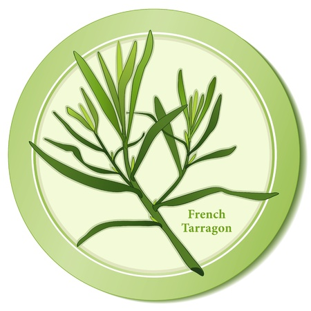 Française à l'estragon Herb Icône Vecteurs