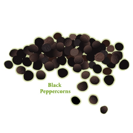 Black Peppercorns, universal spice for cooking  向量圖像