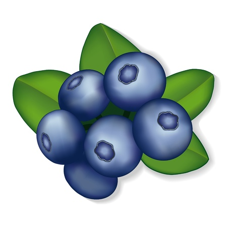 antioxidant: Blueberries illustration isolated on white  EPS8 compatible