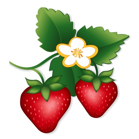 Strawberries and flower illustration isolated on white  EPS8 compatible  Ilustrace