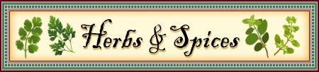koriander: Gyógynövények és fűszerek Banner, koriander koriander, Flat Leaf petrezselyem, olasz oregánó és édes majoránna mozaik csempe keret
