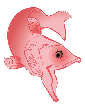 Swimming Salmon drawing illustration, isolated on white background Vector