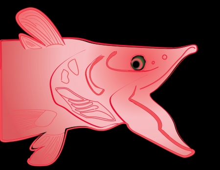 Salmon drawing illustration, isolated on black background   Vector