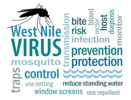 infected: West Nile Virus word cloud, mosquito, standing water, graphic illustration, isolated on white background
