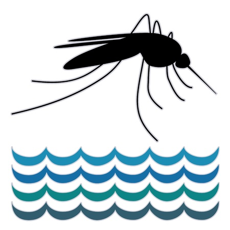infected mosquito: Mosquito, standing water, graphic illustration, isolated on white background