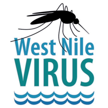 nile: West Nile virus, mosquito, standing water, graphic illustration, isolated on white background