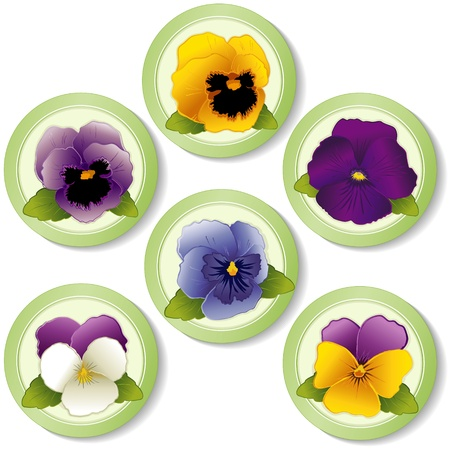 violas: Pansy Flowers and Johnny Jump Ups  Violas  Buttons isolated on white background  Illustration