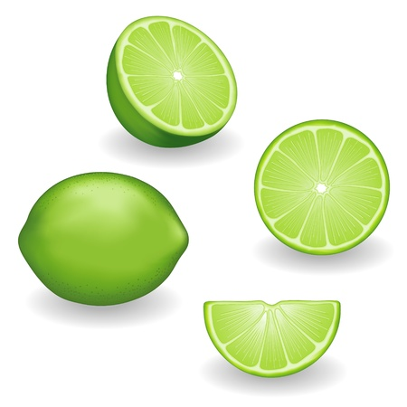 lime green background: Fresh Limes Fruit in four views  whole, half, slice, wedge illustrations isolated on white background