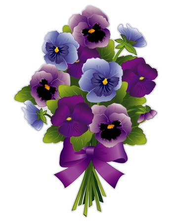 Spring Pansy Bouquet, Viola flowers in purple, lavender and blue with ribbon bow  Isolated on white background   Vector