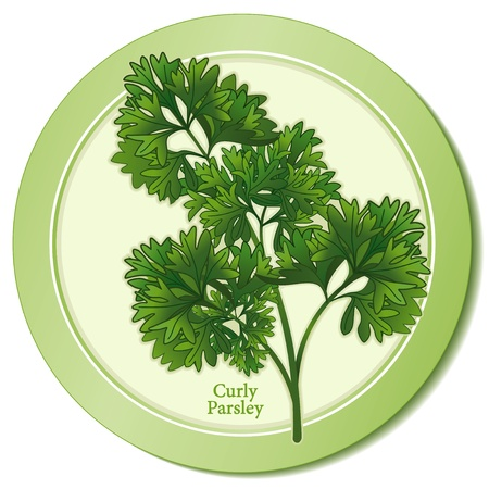 Curly Parsley Herb Icon Vector