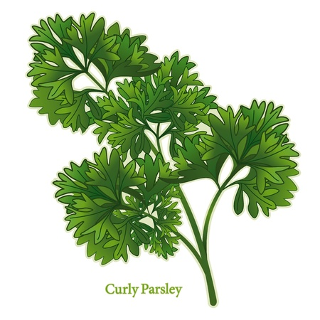 herbes: Curly Parsley Herb
