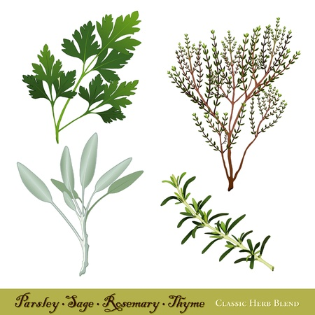 Italian Parsley, Garden Sage, Rosemary, English Thyme classic herb blend Vector