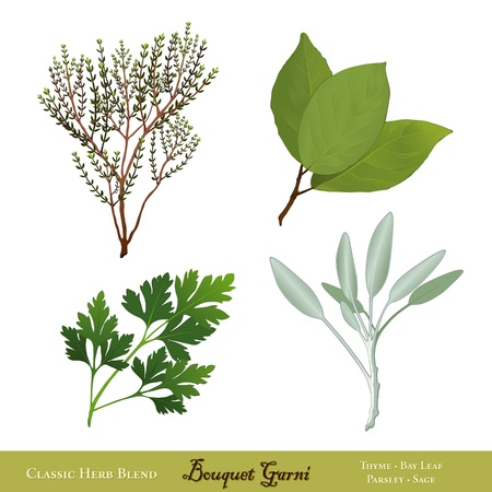 flat leaf: Bouquet Garni, traditional French herb blend  Bay Leaves, English Thyme, Garden Sage, Italian Flat Leaf Parsley  Isolated on white