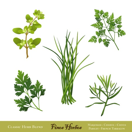 flat leaf: Fines Herbes, classic French herb blend  Sweet Marjoram, Chervil, Chives, Italian Flat Leaf Parsley, French Tarragon  Isolated on white
