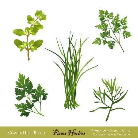 Fines Herbes, klassieke Franse kruid blend marjolein, kervel, bieslook, Italiaanse bladpeterselie, Franse dragon Geïsoleerd op wit