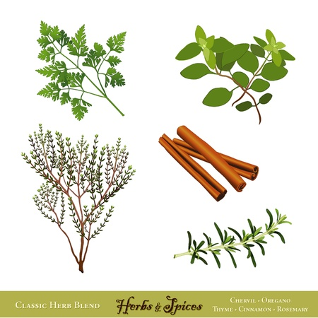 thyme: Universal Cooking Herbs and Spices  French Chervil, Italian Oregano, English Thyme, Cinnamon, Rosemary  Isolated on white