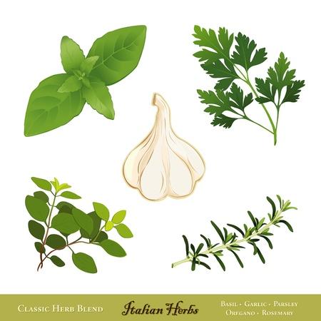 Traditional Italian herbs  Sweet Basil, Garlic, Flat Leaf Parsley, Oregano, Rosemary  Isolated on white