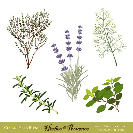 Herbes de Provence, traditional French herb blend  Sweet Lavender, Rosemary, Thyme, Sweet Fennel, Oregano  Isolated on white  Vector