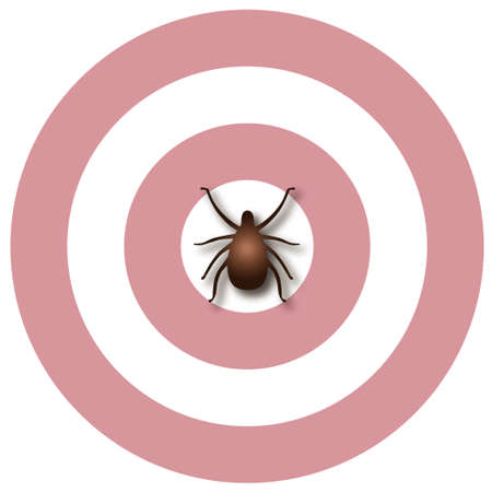 lyme: Lyme Disease illustration,  tick, bulls-eye rash, isolated on white  Illustration