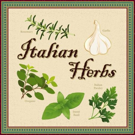 origanum: Italian Herbs; Rosemary, Garlic, Oregano, Sweet Basil and Flat Leaf Parsley; distressed mosaic frame and background  Illustration