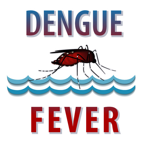 Dengue Fever Mosquito, infectious virus disease, standing water, isolated on white background
