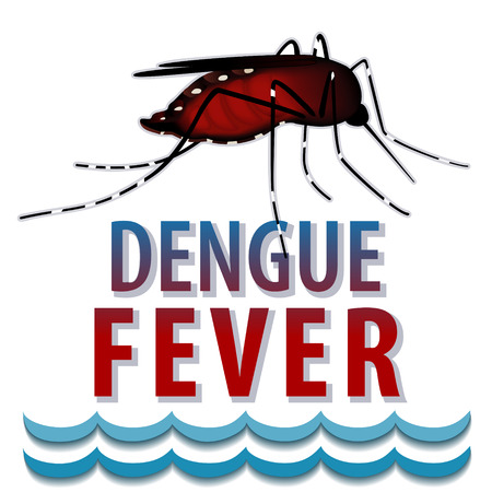 disease prevention: Dengue Fever Mosquito, infectious virus disease, standing water, isolated on white background