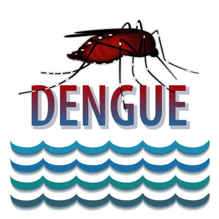 infectious disease: Dengue Fever Mosquito, infectious virus disease, standing water, isolated on white background
